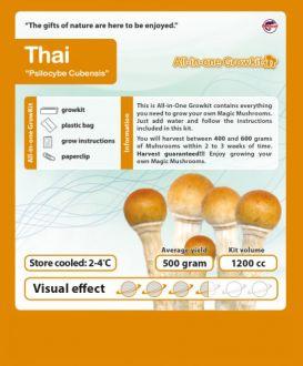 GROWBOX CUBENSIS - THAI