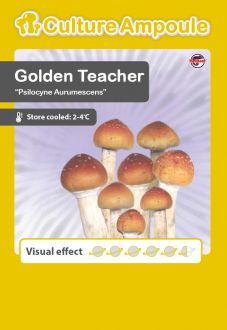 Golden Teacher Culture Ampoule