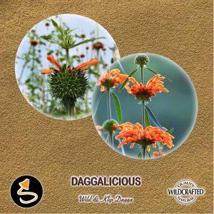 Daggalicious Pulver 10g