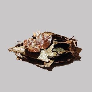 Diploterys cabrerana (Chaliponga) 100g