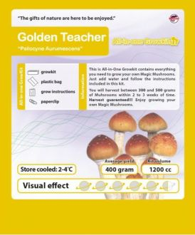 Golden Teacher Growbox
