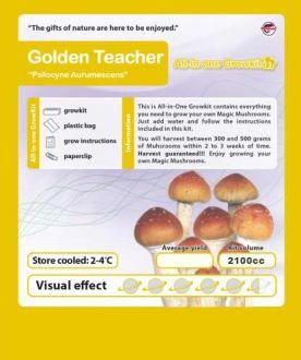 Growbox Golden Teacher 2100cc