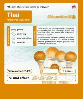 Growbox Cubensis Thai 2100cc