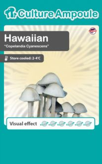 Hawaiian Culture Ampoule Set