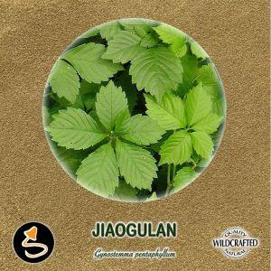 Jiaogulan - Unsterblichkeitskraut Pulver 10g