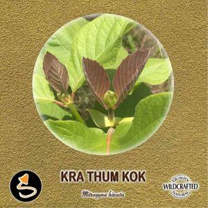 Kra Thum Kok Pulver 10g