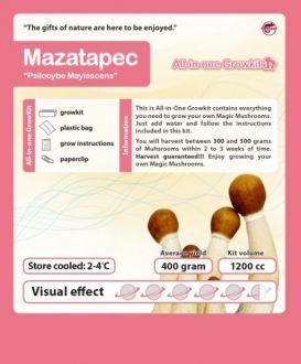 Growbox Cubensis Mazatapec