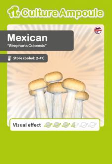 Mexican Culture Ampoule