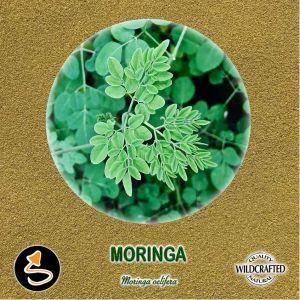Moringa Pulver 10g