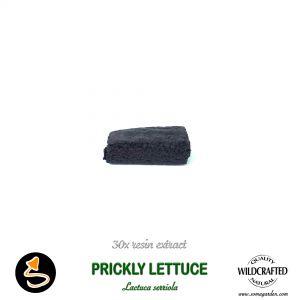 Prickly Lettuce (Lactuca Serriola) 30x Resin Extract