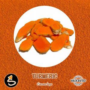 Turmeric - Gelbwurz Pulver 10g