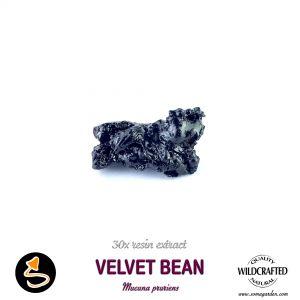 Velvet Bean (Mucuna Pruriens) 30x Resin Extract