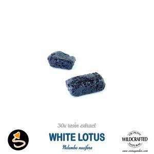 White Lotus Flower (Nelumbo Nucifera) 30x Resin Extract