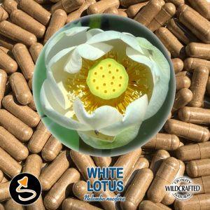 White Lotus Flower 25 Kapseln