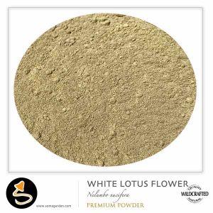 White Lotus Stamen Pulver 10g