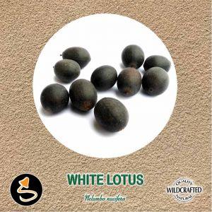 White Lotus Seed Pulver 10g