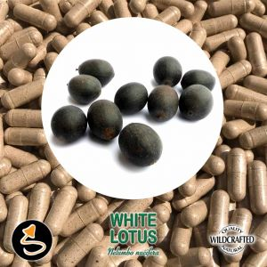 White Lotus Seed 25 Kapseln