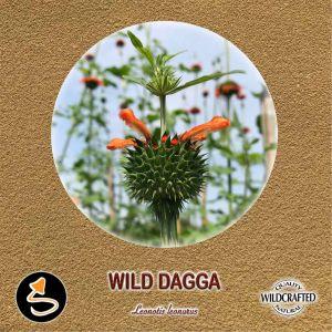 Wild Dagga - Afrikanisches Löwenohr Pulver 10g
