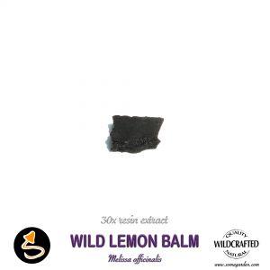 Wild Lemon Balm (Melissa Officinalis) 30x Resin Extract