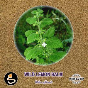 Wild Lemon Balm - Zitronenmelisse Pulver 10g
