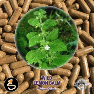 Wild Lemon Balm - Zitronenmelisse 25 Kapseln