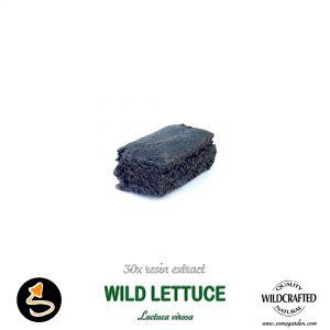 Wild Lettuce (Lactura Virosa) 30x Resin Extract