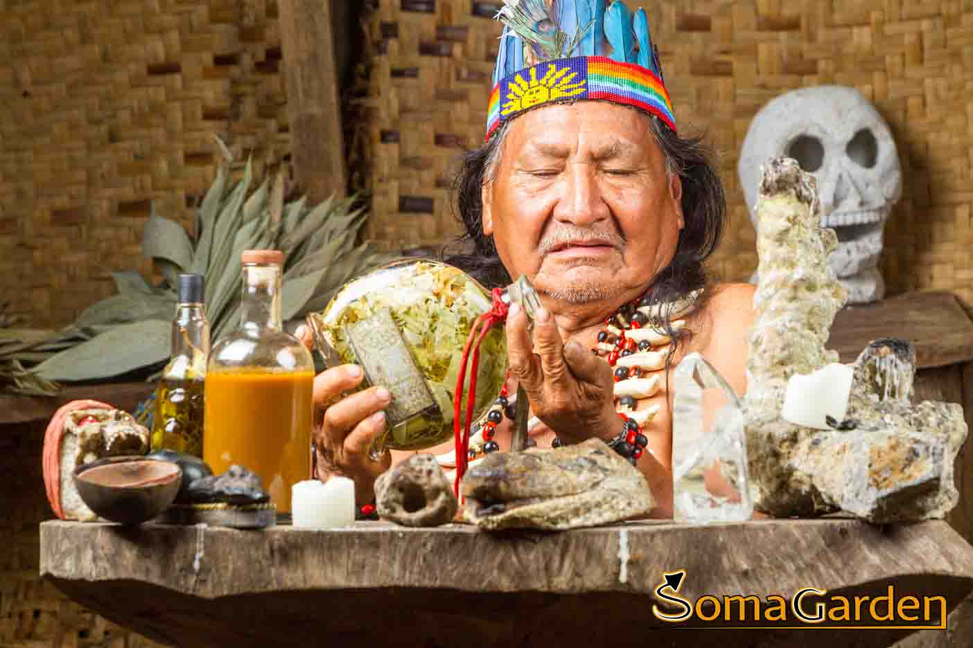 Ayahuasca Bestellen